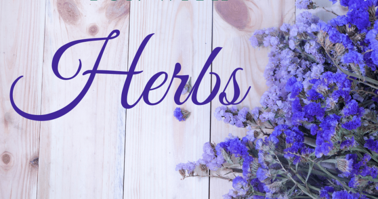 Fun with Herbs