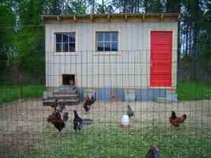 chicken coop with red door