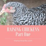 Raising Chickens - Part One