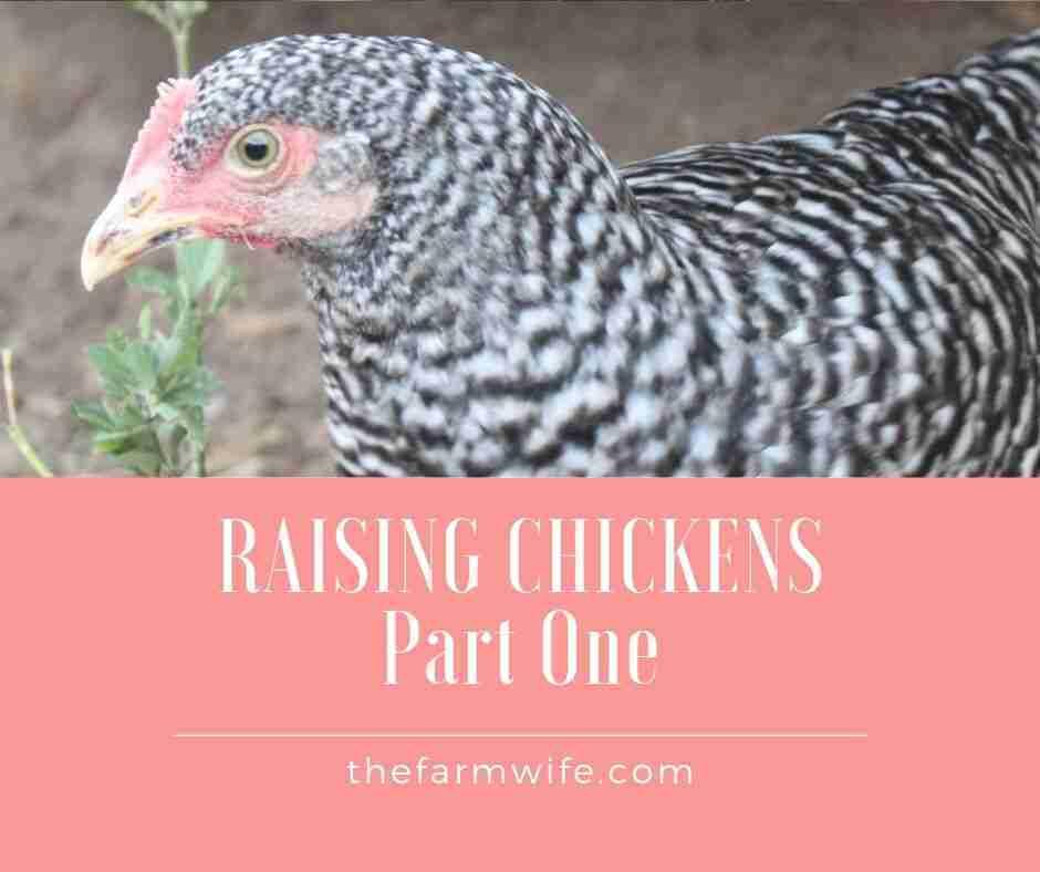 Raising Chickens – Part One