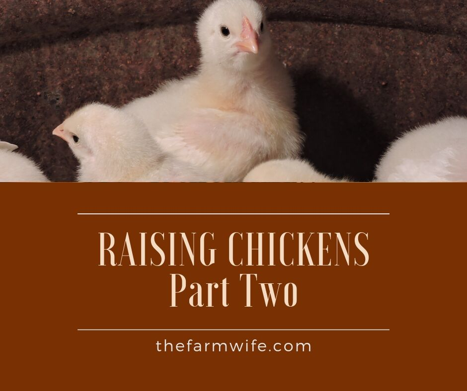 Raising Chickens – Part Two
