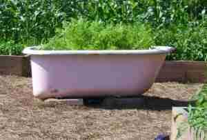 The famous Pink Bathtub
