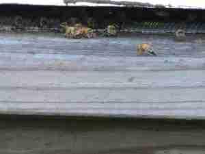 Bomb Bees