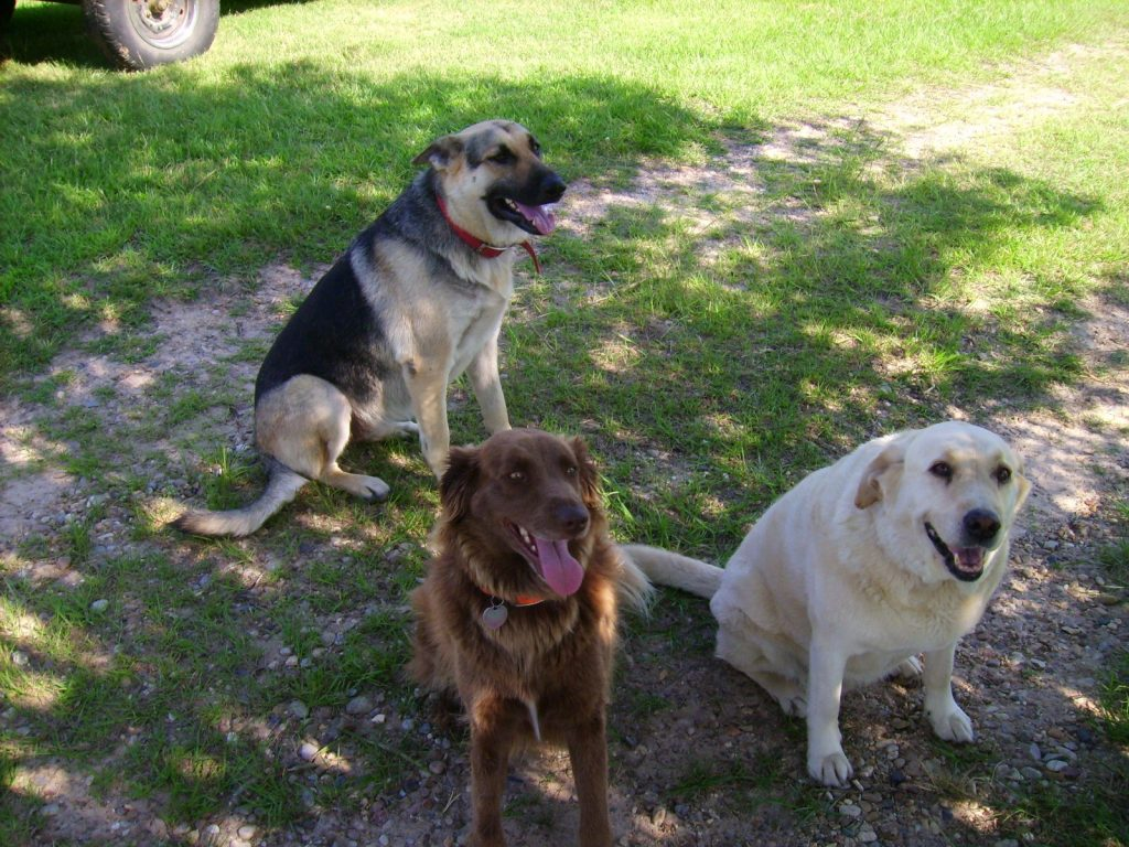 Running with the dogs helps relieve depression