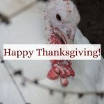a white turkey wishing everyone a Happy Thanksgiving