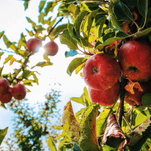 Grow fruit to save money