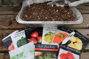 tin pan with seed starting soil