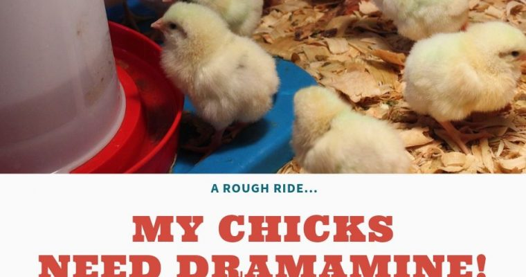 My Chicks need Dramamine