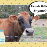Fresh Milk, Anyone?