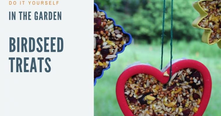 It's for the Birds! – Birdseed Treats