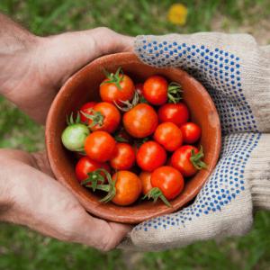 Blending Homemaking and Hometeading - Bartering