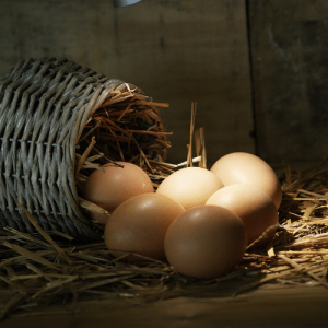 Homesteading - Eggs in a basket