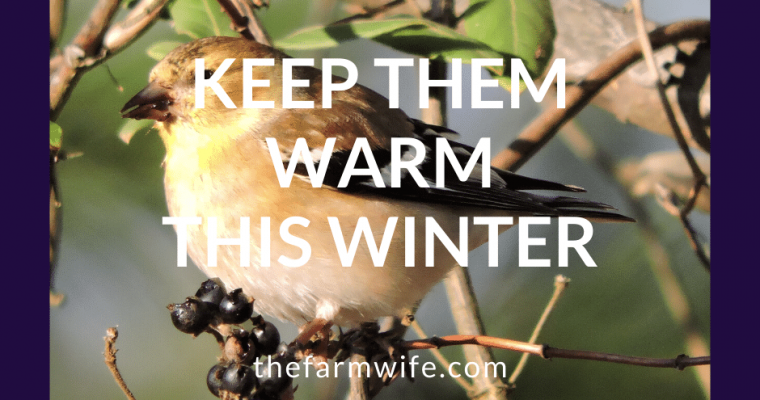 For the Birds – Keep them Warm this Winter