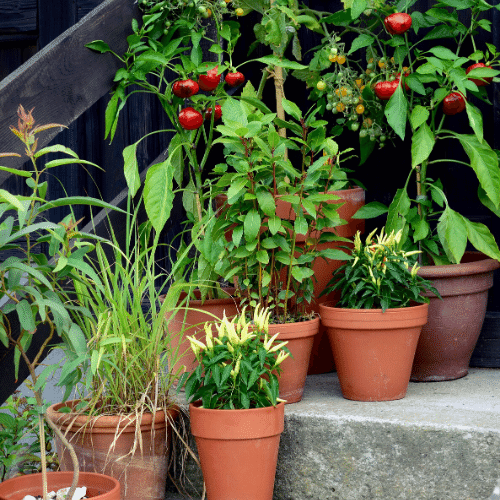 plan an awesome garden using containers