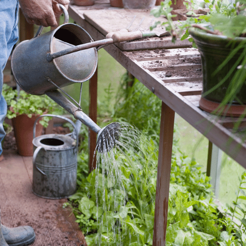 How to irrigate your garden