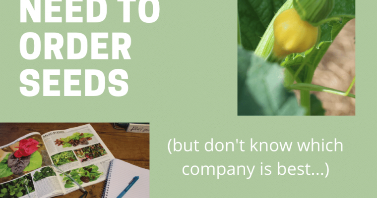 When you Need to Order Seeds, But Don't Know the Best Company