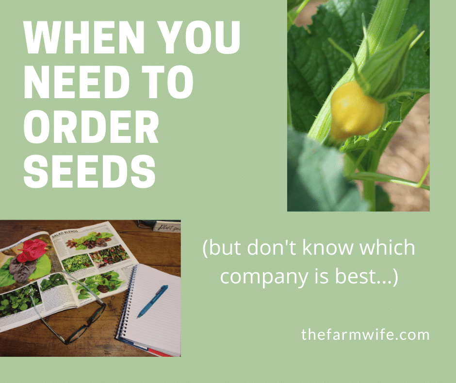 Learn which are the best companies to order seeds from