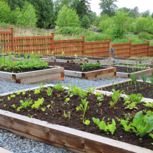 keep size in mind when planning an awesome garden