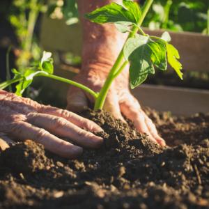 relax and enjoy through gardening