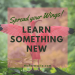 Stretch Your Wings - Learn Something New & Exciting!