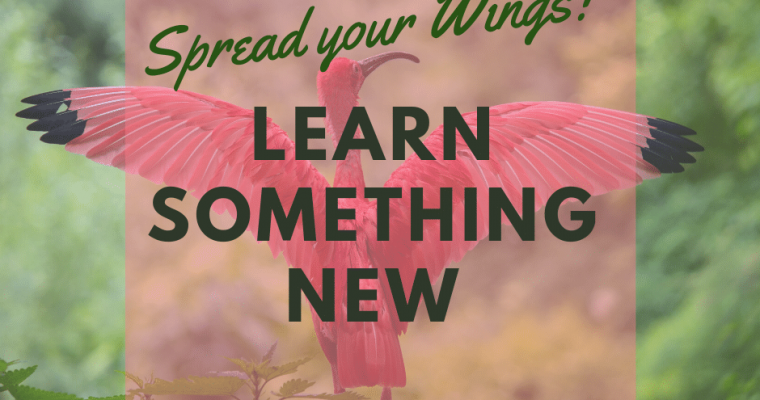 Stretch Your Wings – Learn Something New & Exciting!