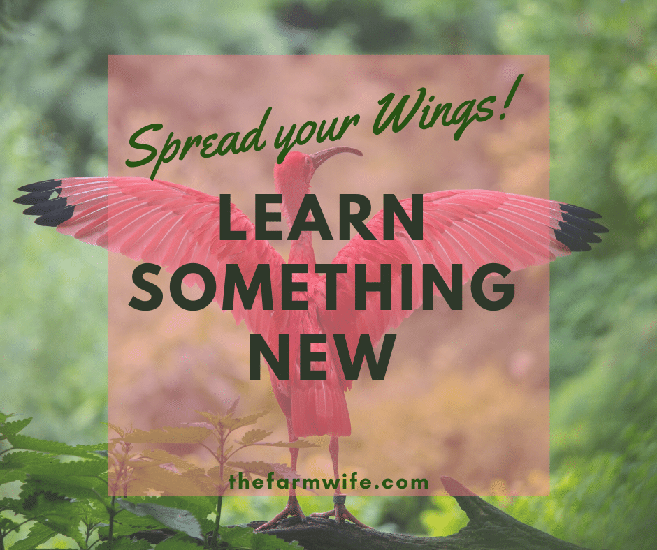 Spread Your Wings - Learn Something New