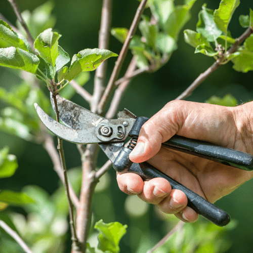 Pruning on Barren Days