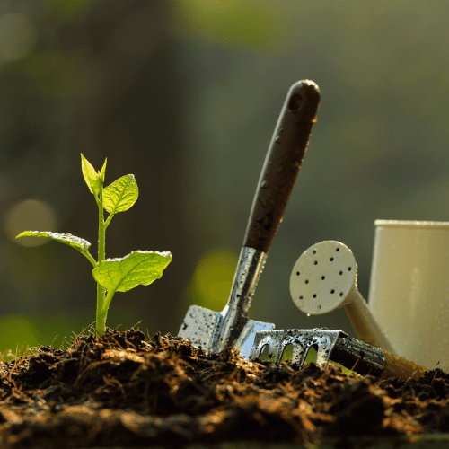 garden tips for the beginner - planting