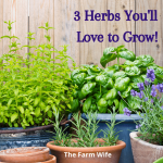 3 Delightful Herbs You'll Love -Not Just for Cooking!