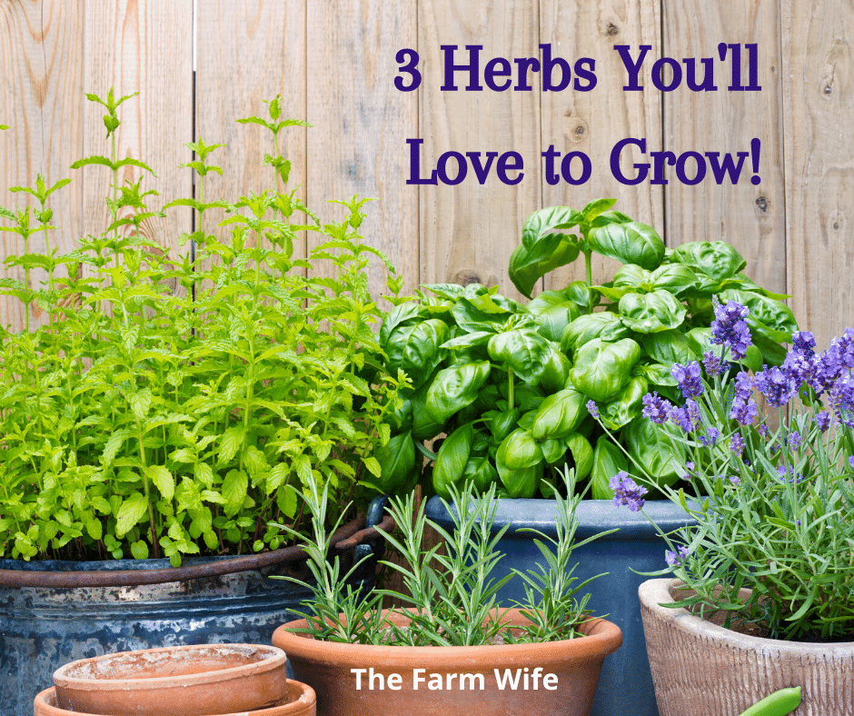 3 herbs you'll love to grow