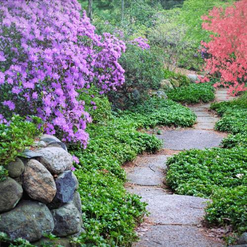 Pathway through a garden sanctuary