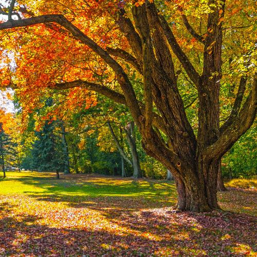 Enjoying Nature can help ease depression