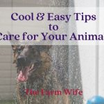 'Cool' & Easy Tips to Care for Your Animals