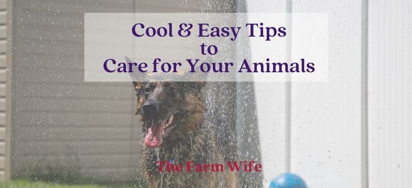 Cool & Easy Tips to Care for Your Animals