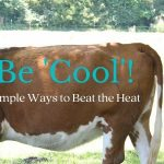 Be 'Cool'! Simple Ways to Beat the Heat