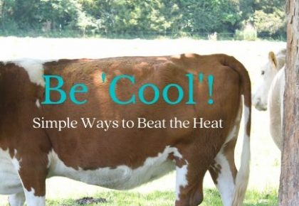 Be Cool with Simple Ways to Beat the Heat