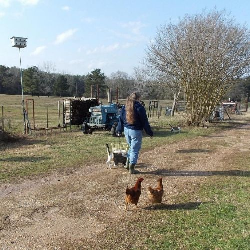 walking with chickens