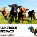 Farm Fresh Blog Hop 81 - the cows are ready to read the posts!