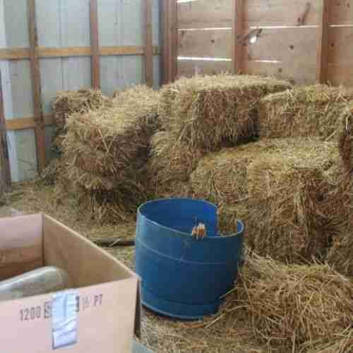 bales of wheat straw