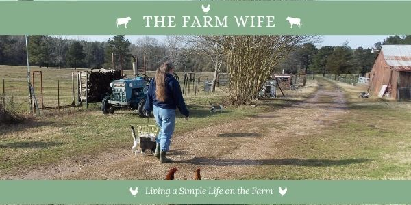 the farm wife walking towards a barn followed by cats and chickens