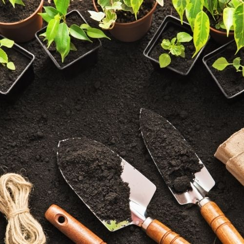 gardening tools and small plants