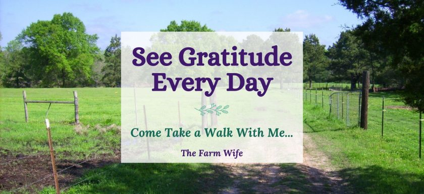 see gratitude every day with a simple walk down a country lane