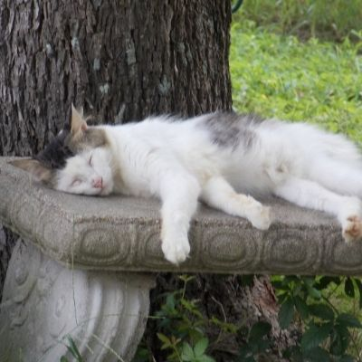 a cat napping on a bench
