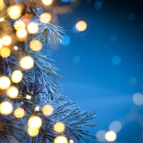 a starry night edged by a Christmas tree with white lights