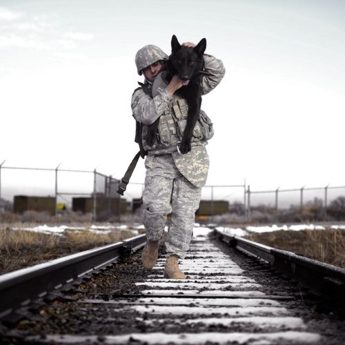 a soldier carrying his dog down railroad tracks