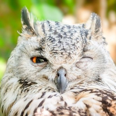 An owl with one eye open towards overcoming the 2021 Challenges