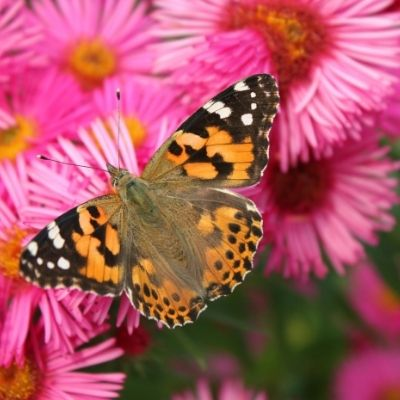 blossom and become a beautiful butterfly when you make a choice for a better life