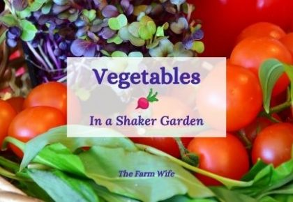 vegetables in a shaker garden