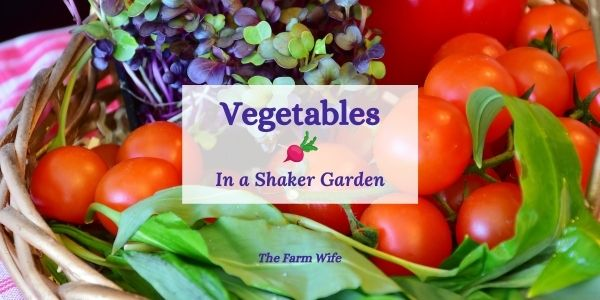 vegetables in a shaker garden
