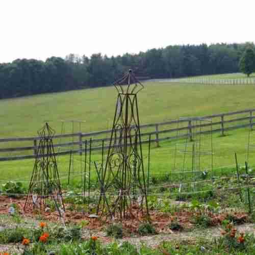 a  shaker garden